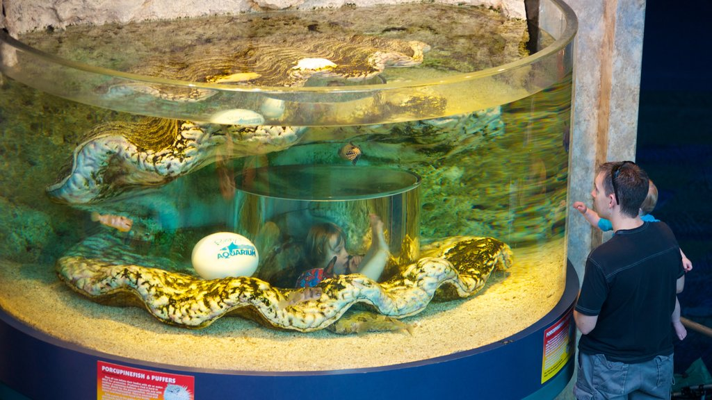 Myrtle Beach which includes marine life, interior views and a pond