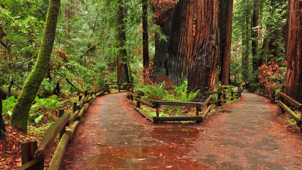 Muir Woods showing forest scenes, landscape views and a park