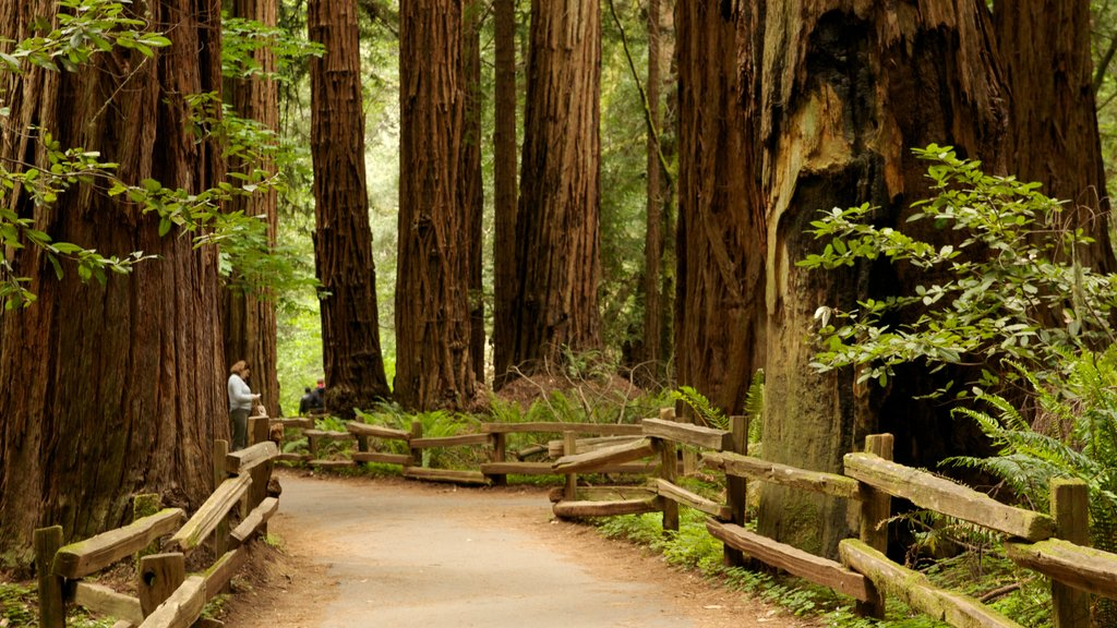 Muir Woods which includes a park, landscape views and forests