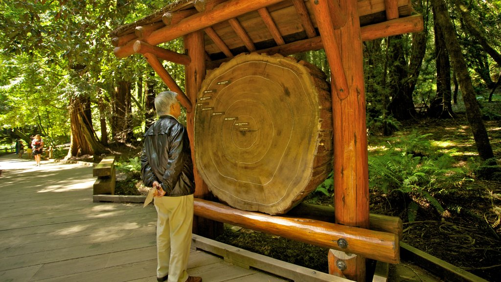 Muir Woods which includes a park and forests as well as an individual male