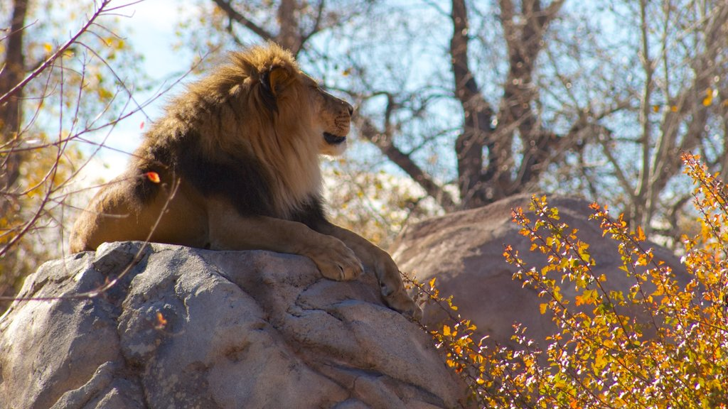 Denver Zoo featuring zoo animals, dangerous animals and fall colors