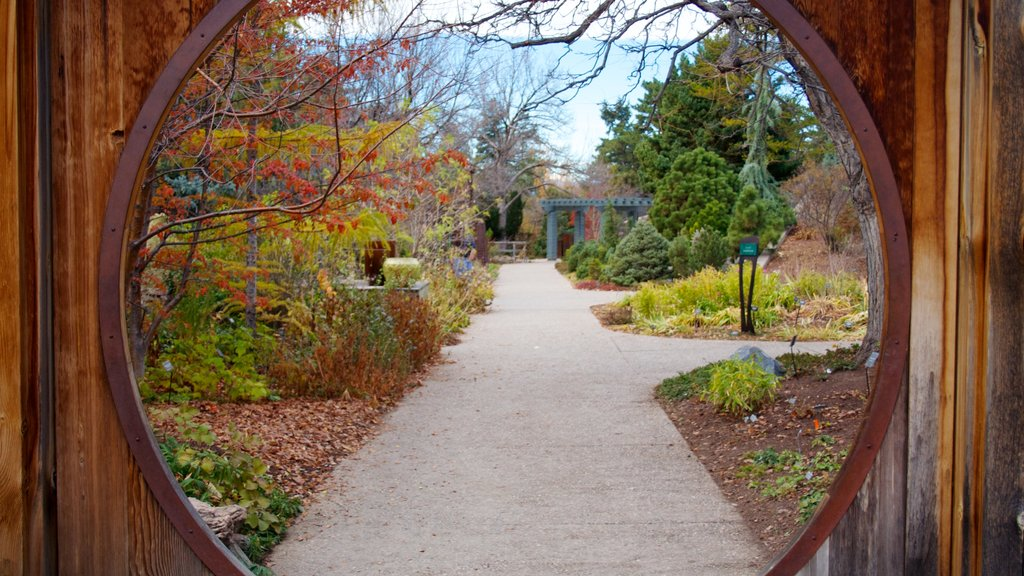 Denver Botanic Gardens showing a park, wildflowers and autumn leaves