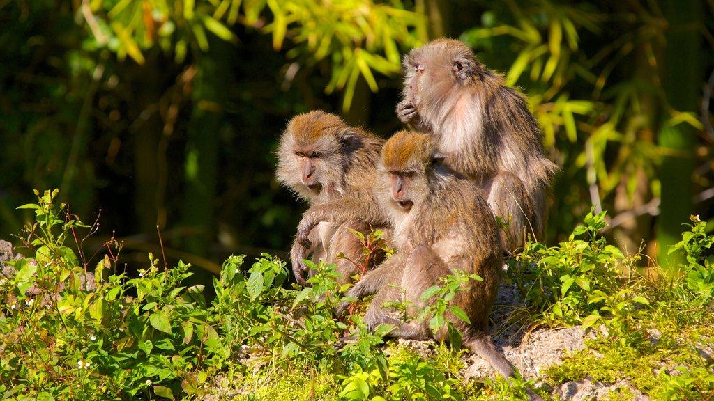 Monkey Jungle featuring zoo animals