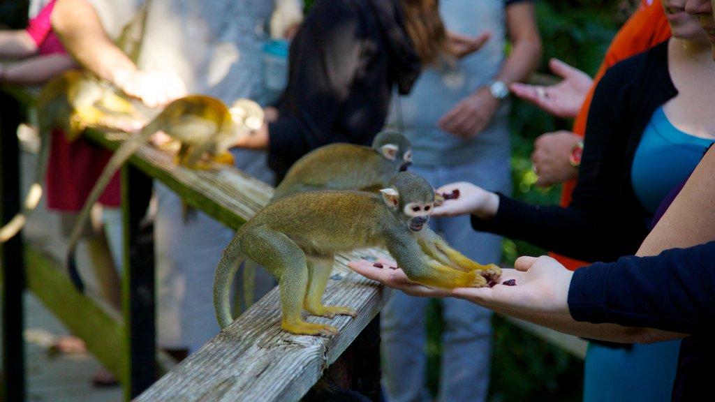 Monkey Jungle showing zoo animals