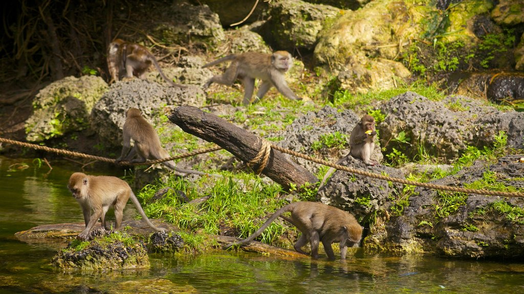 Monkey Jungle which includes landscape views, a pond and zoo animals