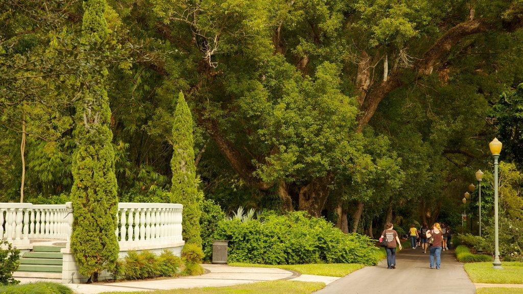 Jardines de Harry P. Leu que incluye escenas forestales, vistas de paisajes y un parque