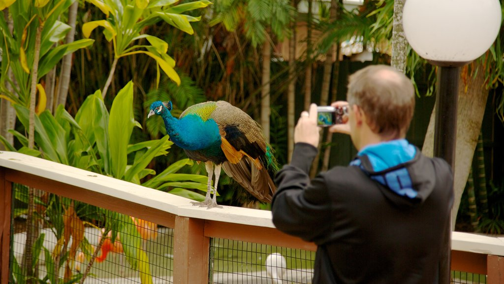 Miami Seaquarium which includes zoo animals, interior views and bird life