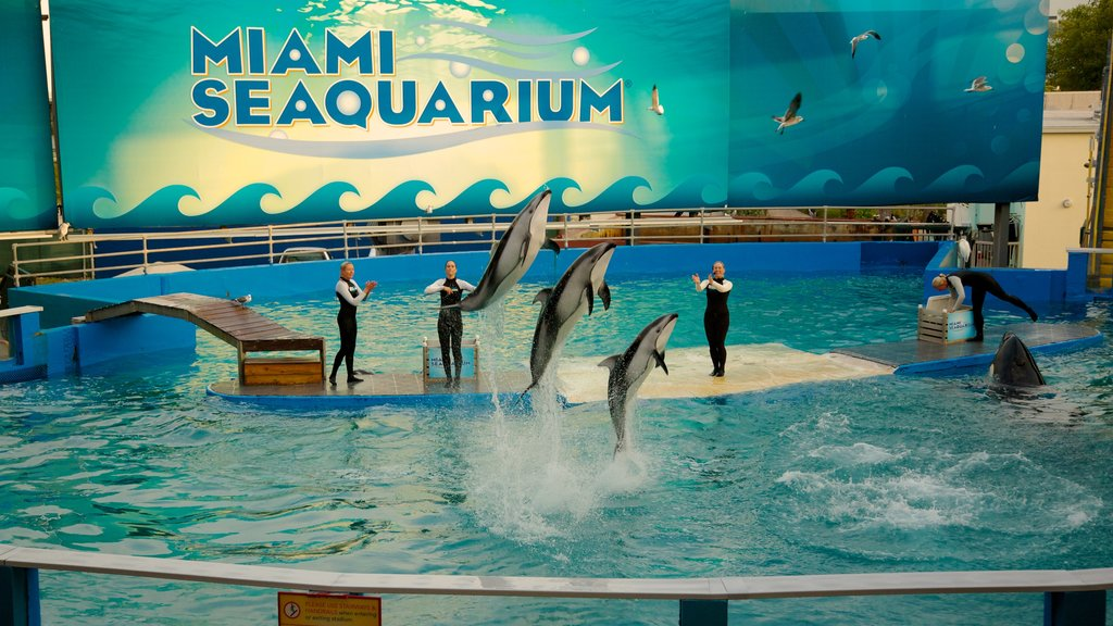 Miami Seaquarium showing marine life and a waterpark