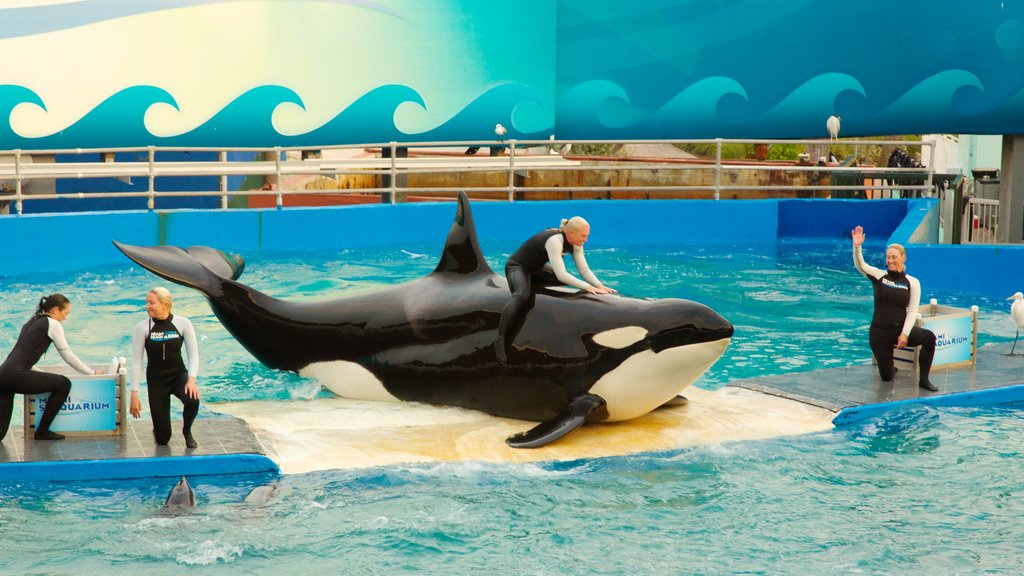 Miami Seaquarium featuring marine life and whale watching