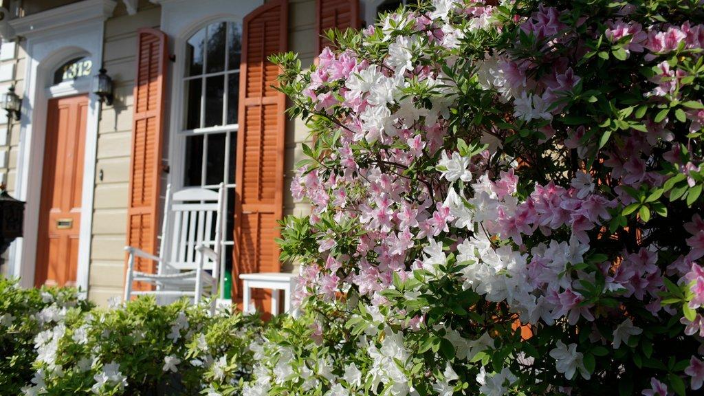 Garden District mostrando una casa, flores y un jardín