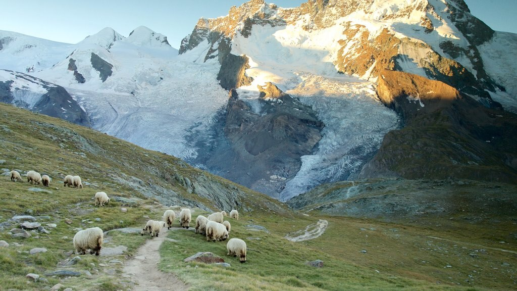 Gornergrat Station showing tranquil scenes, a sunset and land animals