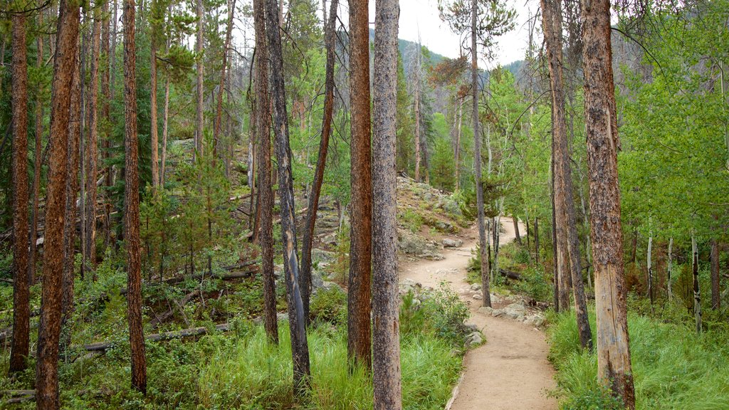 Estes Park showing forests