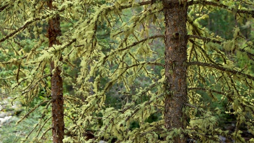 Estes Park featuring forest scenes