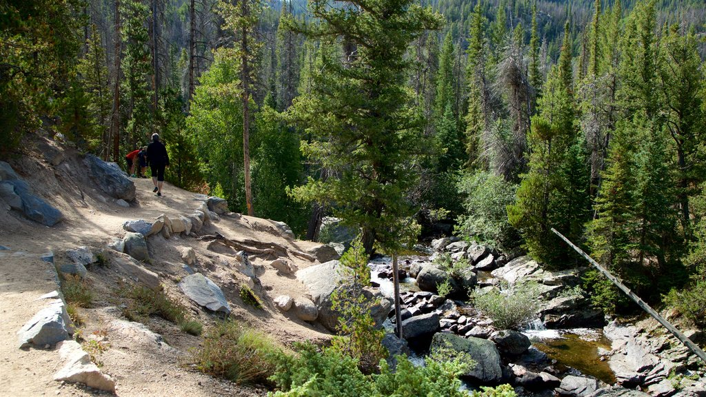 Estes Park featuring a river or creek and forest scenes