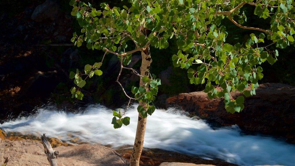 Estes Park featuring rapids