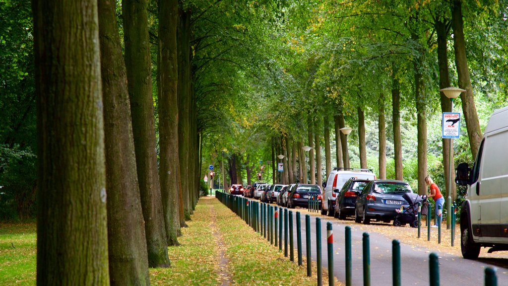 Bremen Buergerpark featuring a park