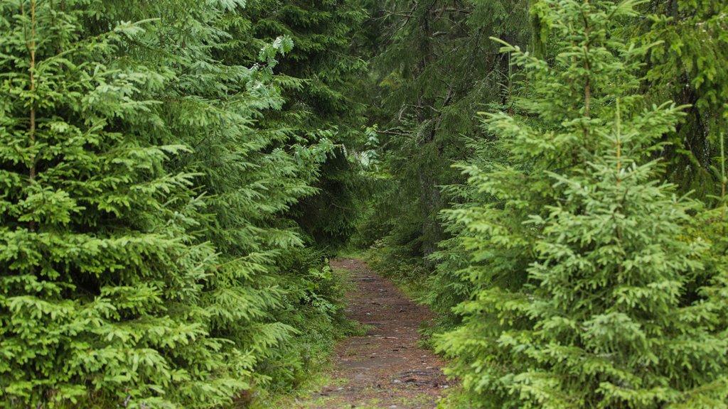 Gardermoen showing forest scenes