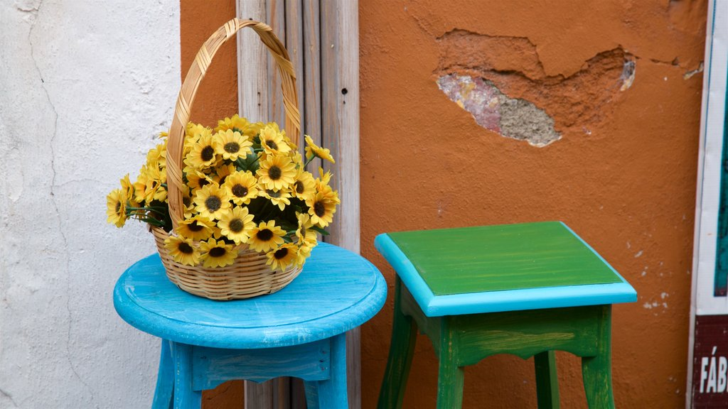 Bazar los Sapos que incluye flores