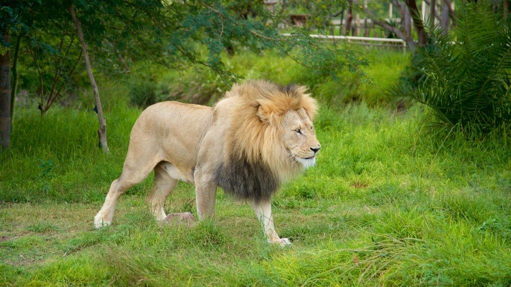 Zoológico Africam Safari que incluye animales del zoológico y animales peligrosos