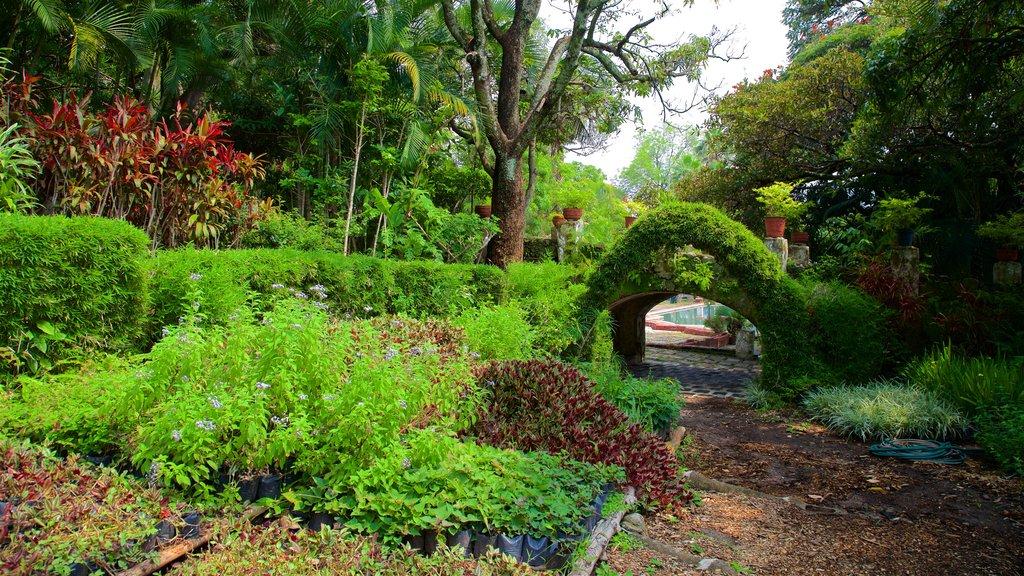 Borda Gardens featuring a park