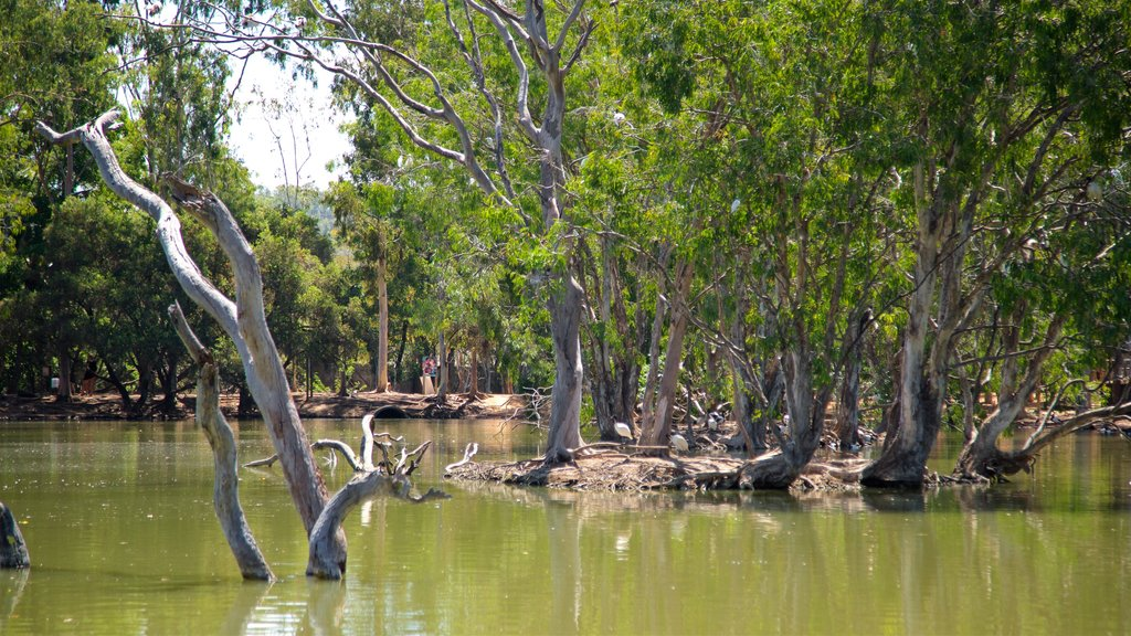 Billabong Sanctuary which includes wetlands