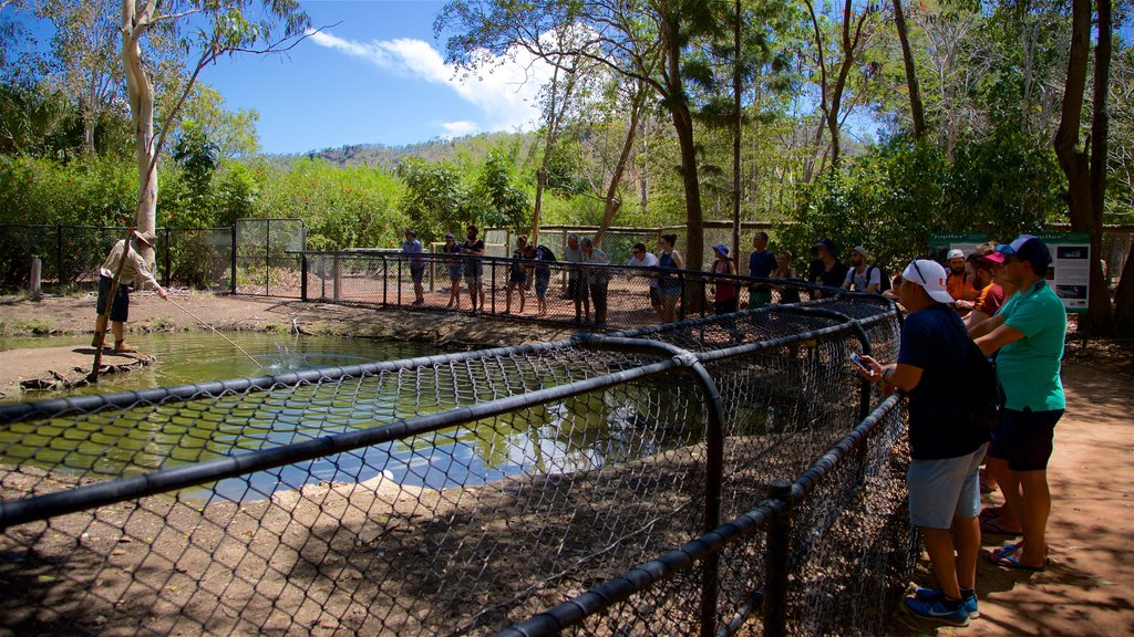 Billabong Sanctuary which includes zoo animals as well as a small group of people