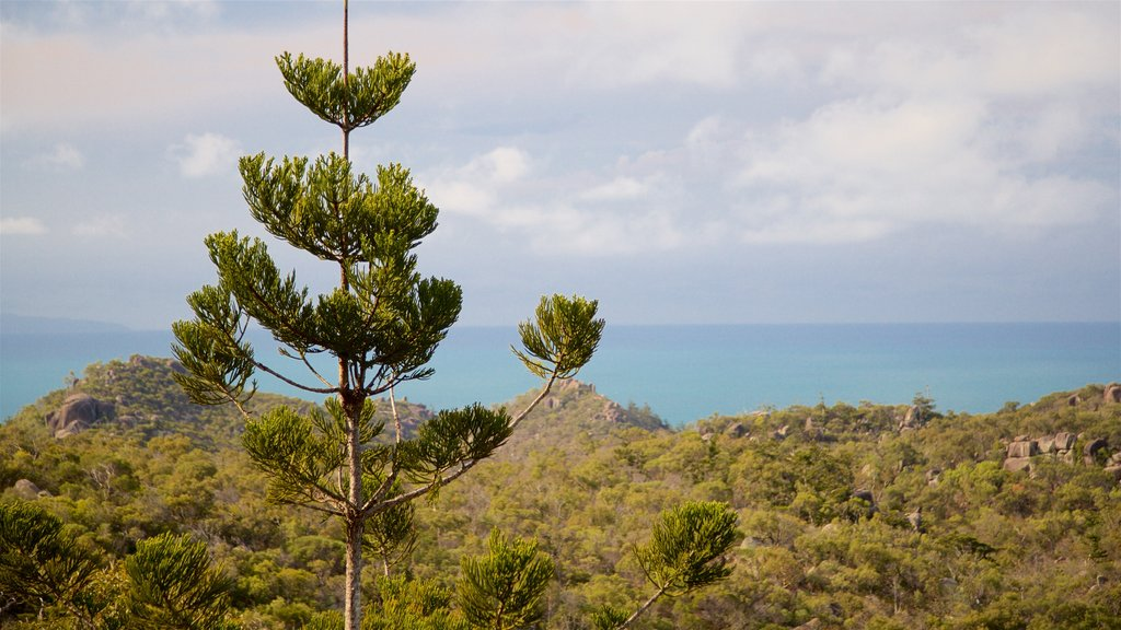 Magnetic Island National Park which includes tranquil scenes and general coastal views