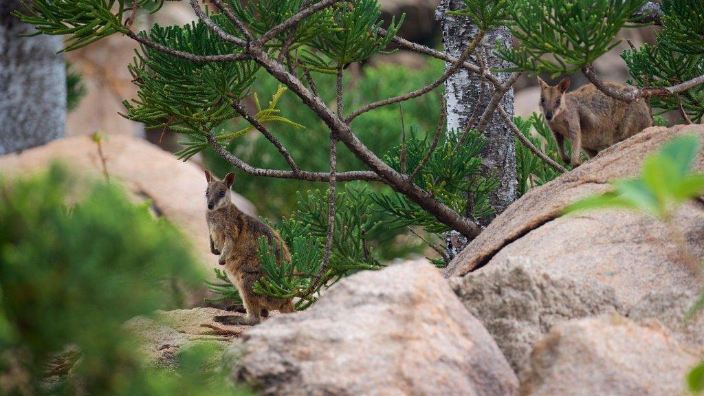 Parque Nacional Magnetic Island que incluye animales tiernos