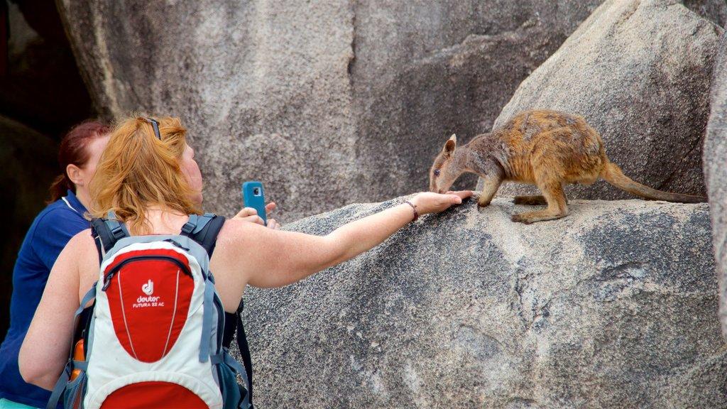 Parque Nacional Magnetic Island que incluye animales tiernos y también una mujer