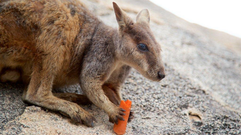 Parque Nacional Magnetic Island mostrando animales tiernos