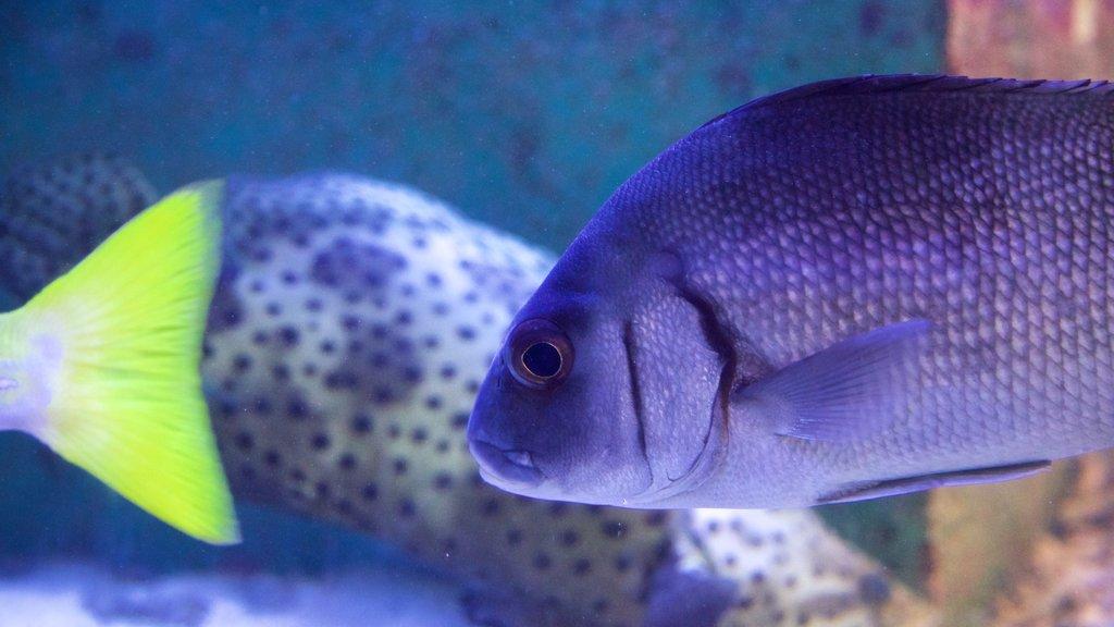 ReefHQ Aquarium featuring marine life