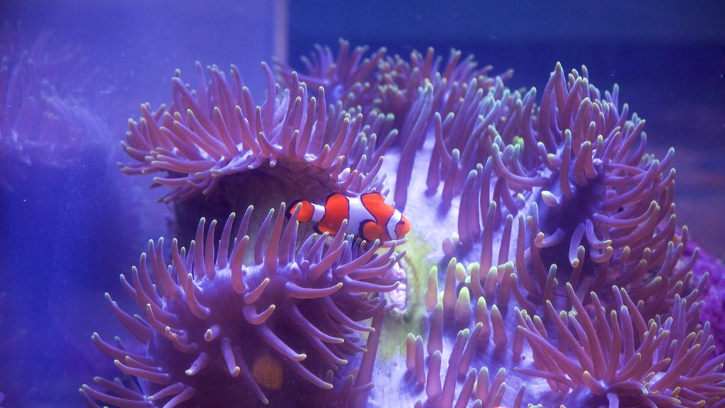 ReefHQ Aquarium which includes marine life