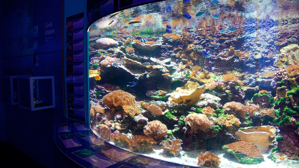 ReefHQ Aquarium featuring interior views and marine life