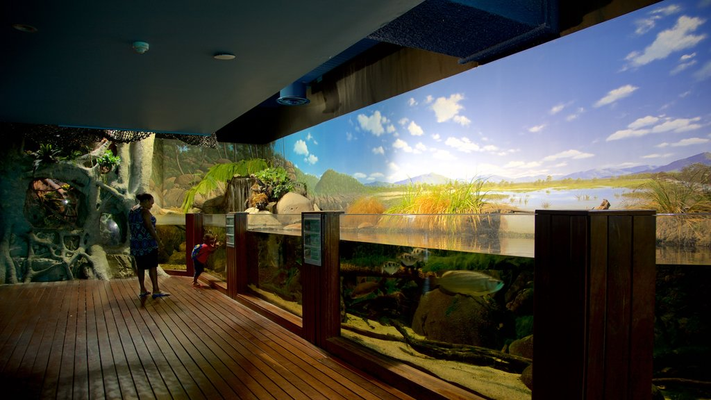 Townsville que incluye vida marina y vistas interiores y también una familia