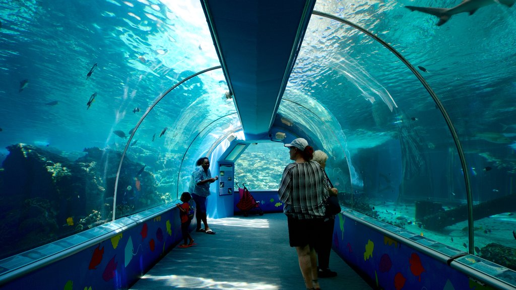 ReefHQ Aquarium featuring interior views and marine life as well as a small group of people