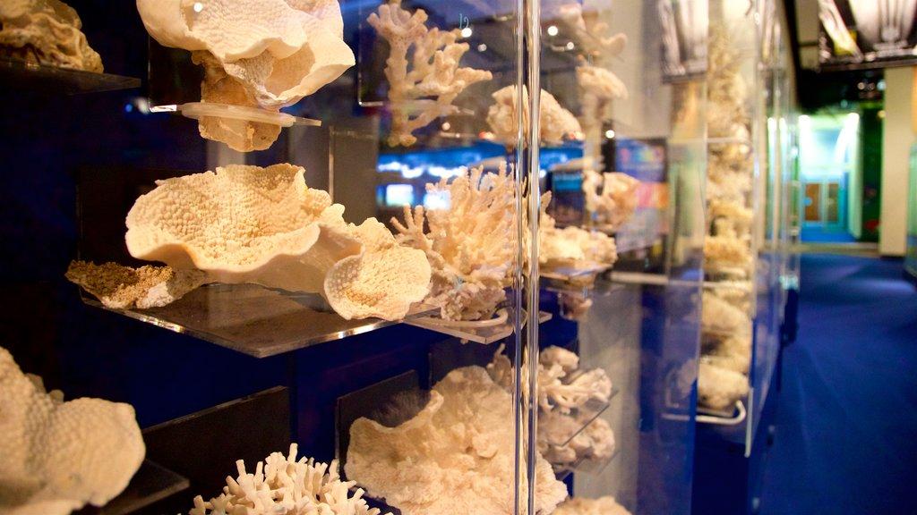 Museum of Tropical Queensland mostrando vistas interiores