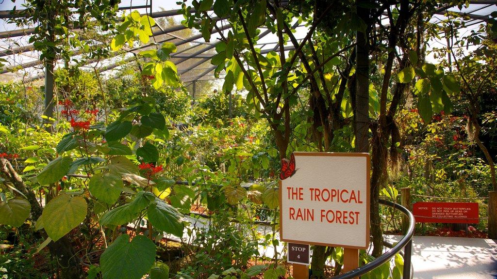 Butterfly World ofreciendo escenas tropicales, vistas interiores y flores