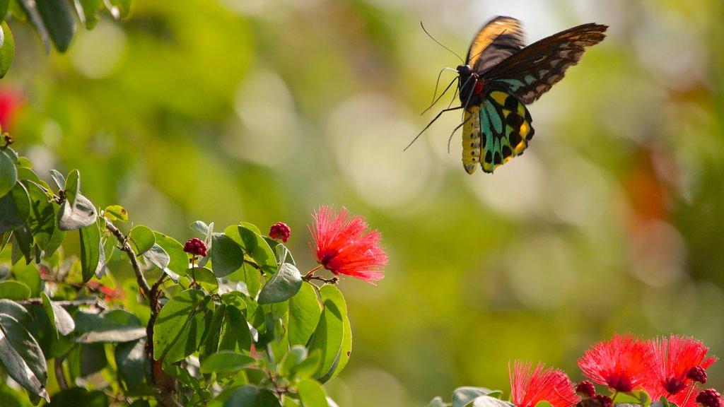 Butterfly World mostrando flores, flores silvestres e animais