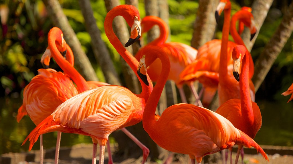 Flamingo Gardens showing bird life and zoo animals
