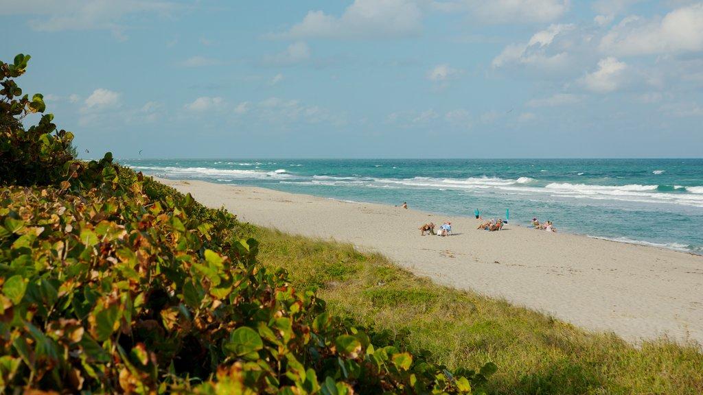 Jupiter Beach featuring landscape views and a sandy beach