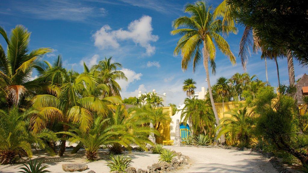 Casa museo Bonnet y jardines ofreciendo vistas de paisajes, escenas tropicales y un jardín