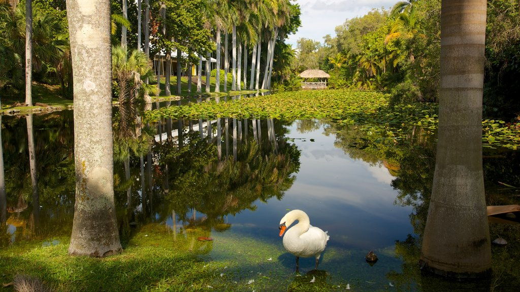 Casa museo Bonnet y jardines mostrando humedales, vida de las aves y vistas de paisajes