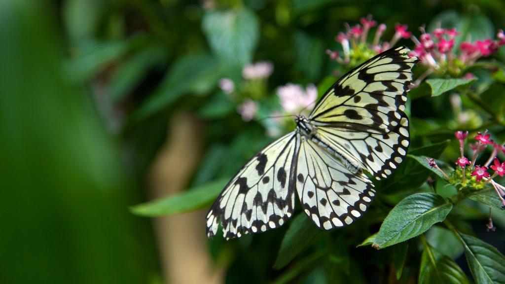 Academy of Natural Sciences ofreciendo flores y animales