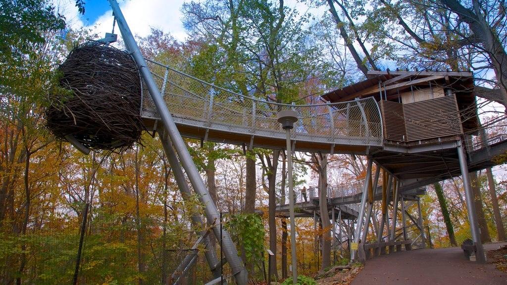 Morris Arboretum que incluye los colores del otoño, un jardín y bosques