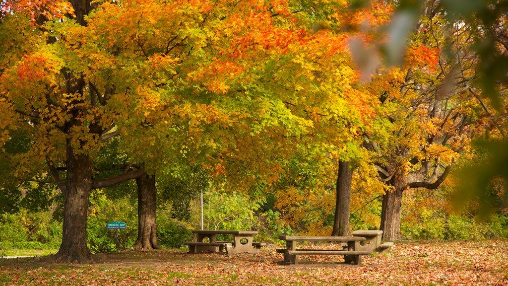 Filadelfia ofreciendo los colores del otoño, escenas forestales y un parque