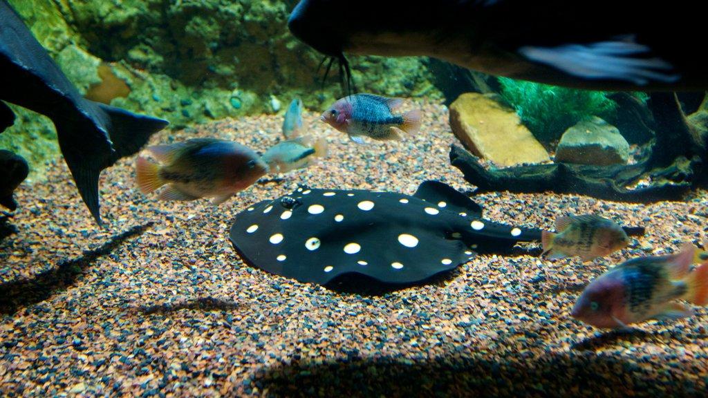 Acuario Downtown ofreciendo vida marina