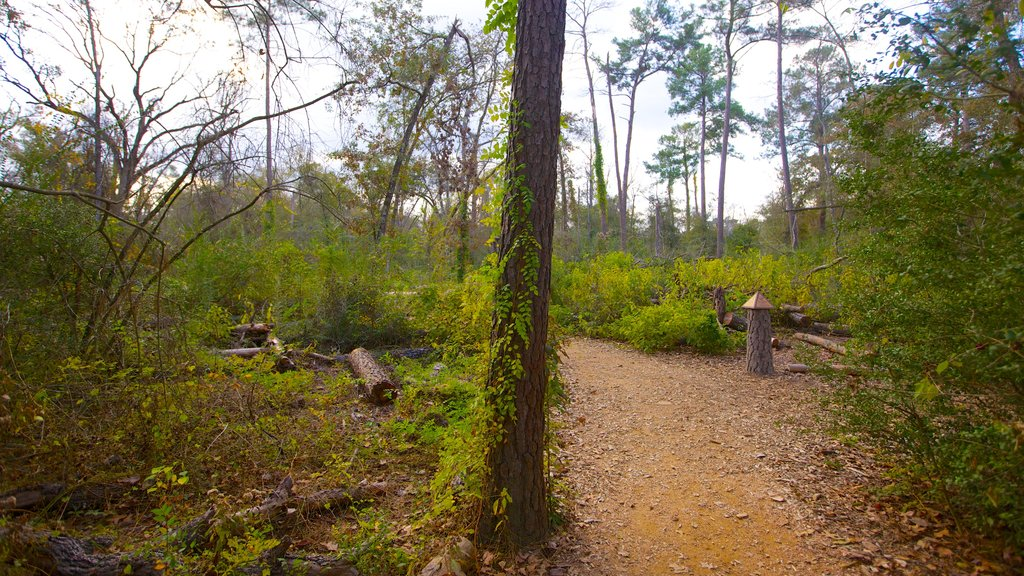 Houston Arboretum and Nature Center featuring forests, a garden and tranquil scenes