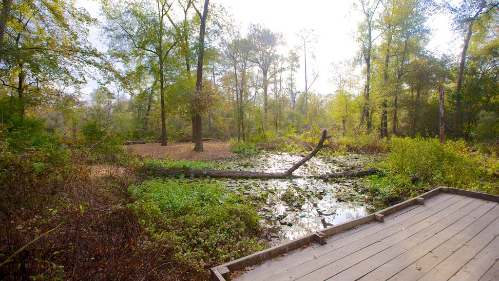 Houston Arboretum and Nature Center showing forest scenes, wetlands and a park