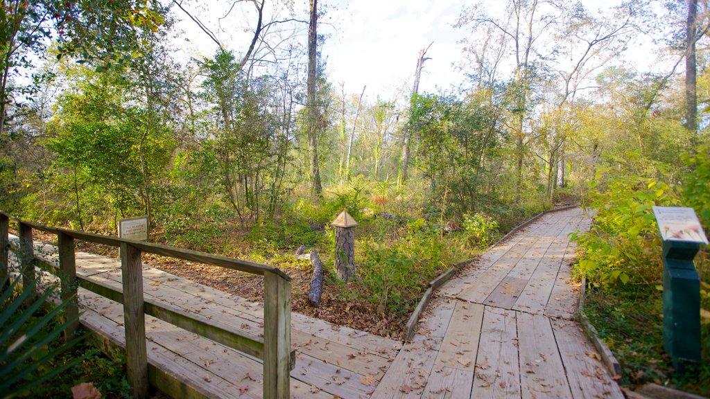 Houston Arboretum and Nature Center showing forest scenes, landscape views and a park