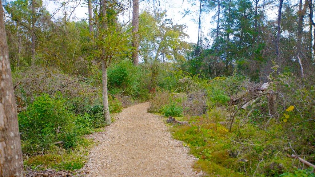 Houston Arboretum and Nature Center showing forest scenes, a park and landscape views